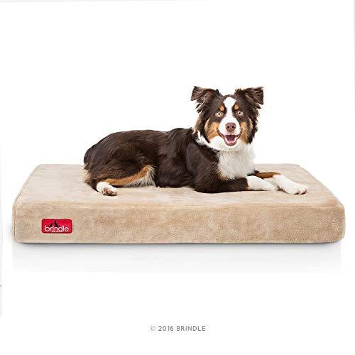 Brindle 4 Inch Solid Memory Foam Orthopedic Dog Bed