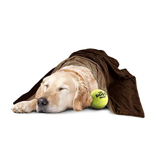 The Dog's Balls The Dog's Blanket