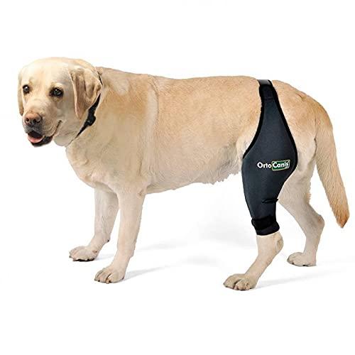 Ortocanis Knee Brace For Dogs