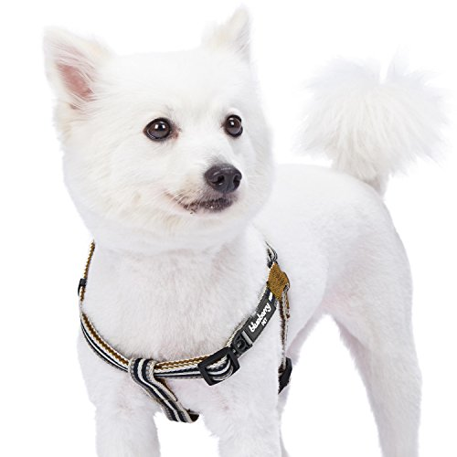 Blueberry Pet Multi-Colored Stripe Step In Dog Harness