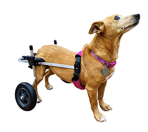 K9 Carts Wheel Chair For Small Dogs