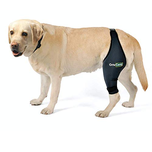 Ortocanis Knee Brace For Dogs
