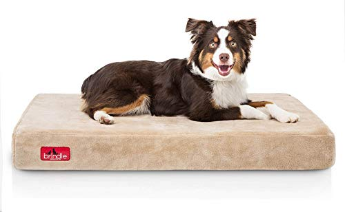 Brindle 4 Inch Solid Memory Foam Orthopedic Dog Bed