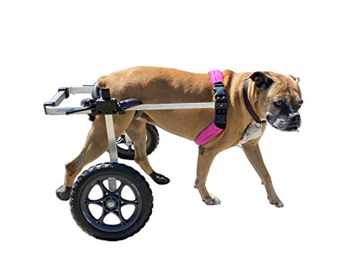 K9 Carts Large Wheelchair (For 50-80 lbs)