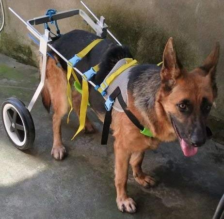 Newlife Mobility Adjustable Wheelchair For LargeDogs
