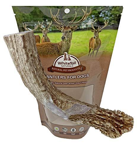 WhiteTail Naturals 7-8 Inch Deer Antler