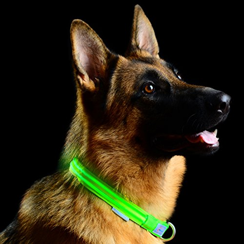 Pet Industries Metal Buckle LED Dog Collar