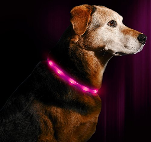 Illumiseen LED Dog Necklace Collar
