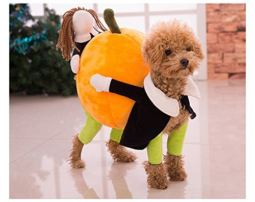 Pumpkin Carrying Costume