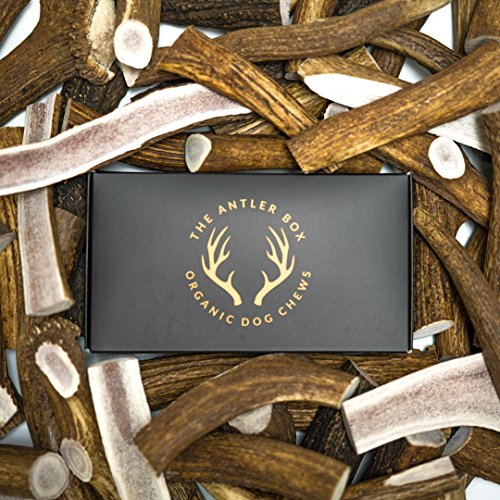 The Antler Box Premium Elk Antler Dog Chews
