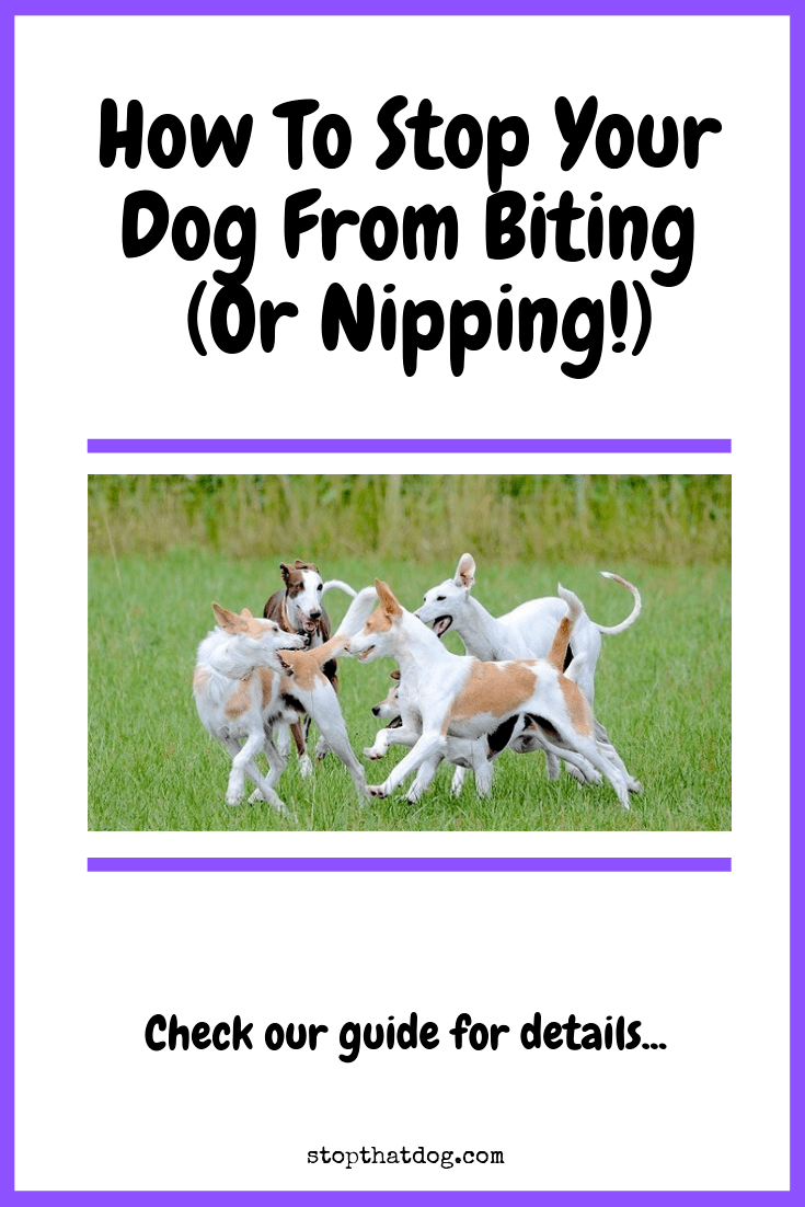 How To Stop Your Dog From Biting (Or Nipping!)