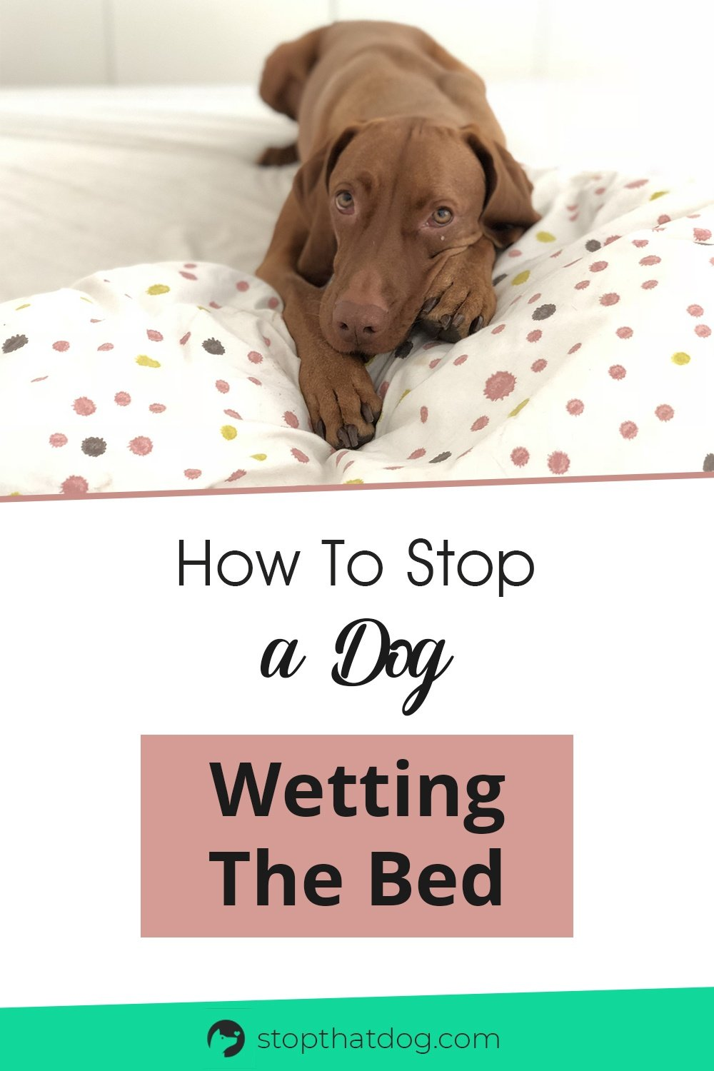 How Can I Stop My Dog From Peeing On My Bed?