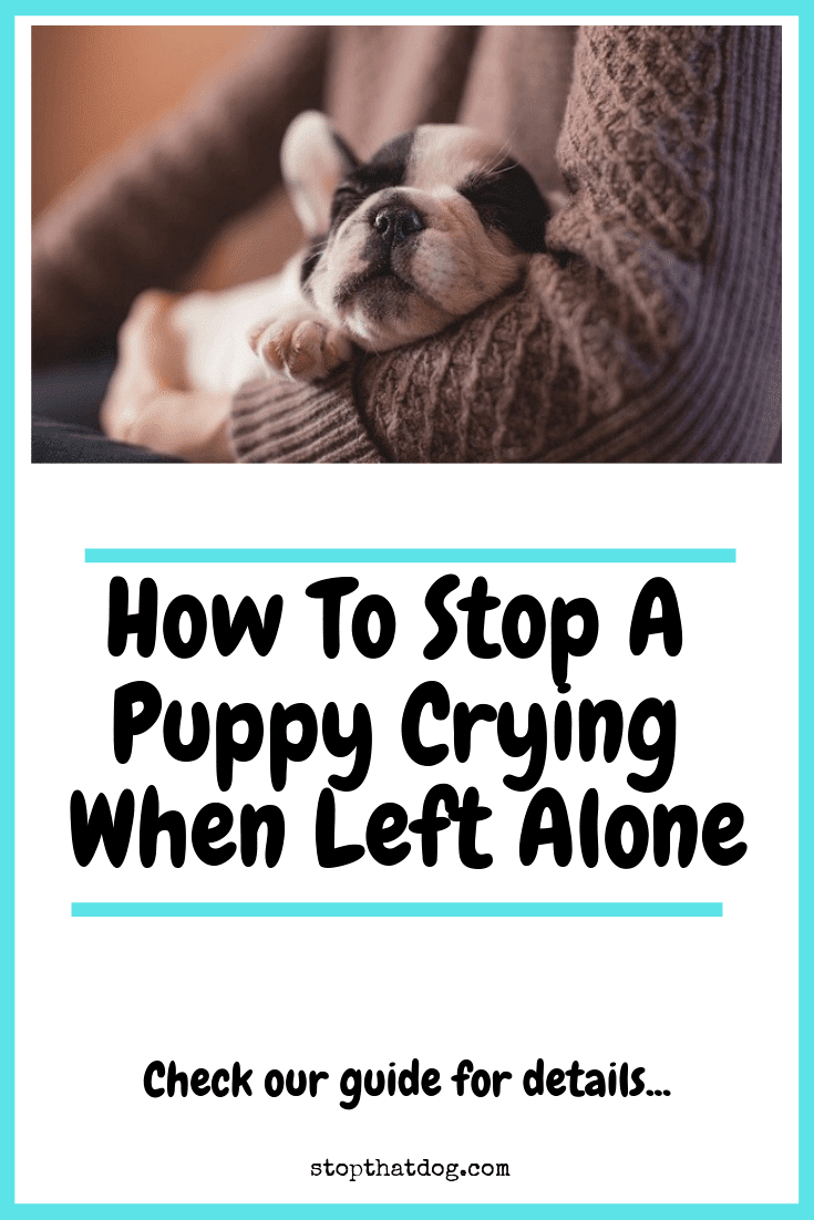 How To Stop A Puppy Crying When Left Alone