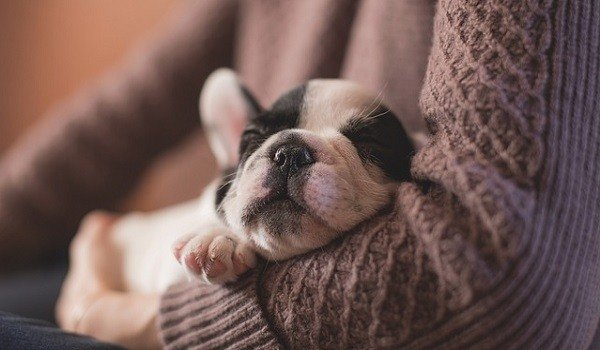 How To Stop a Puppy Crying When Left Alone (These 8 Tips Really Help!) 1