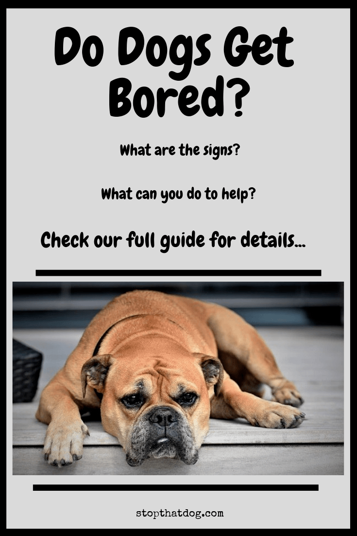 Do Dogs Get Bored? Here's What You Need To Know