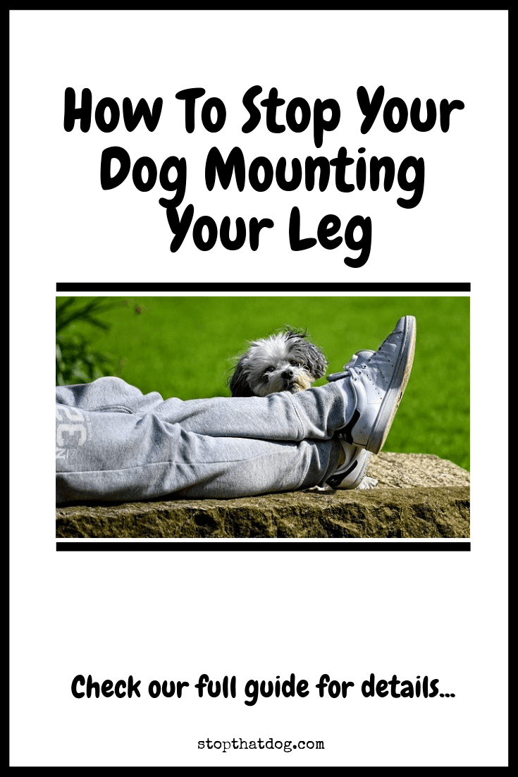 How To Stop A Dog Humping Your Leg