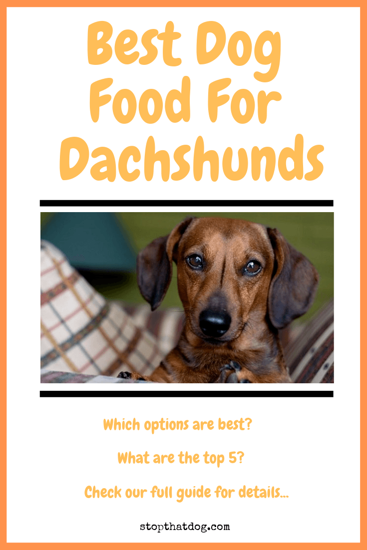 What's The Best Dog Food For A Dachshund? Your Ultimate Guide