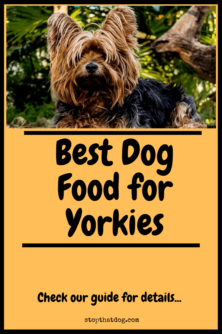 What's The Best Dog Food for Yorkies? Our Favorite Picks