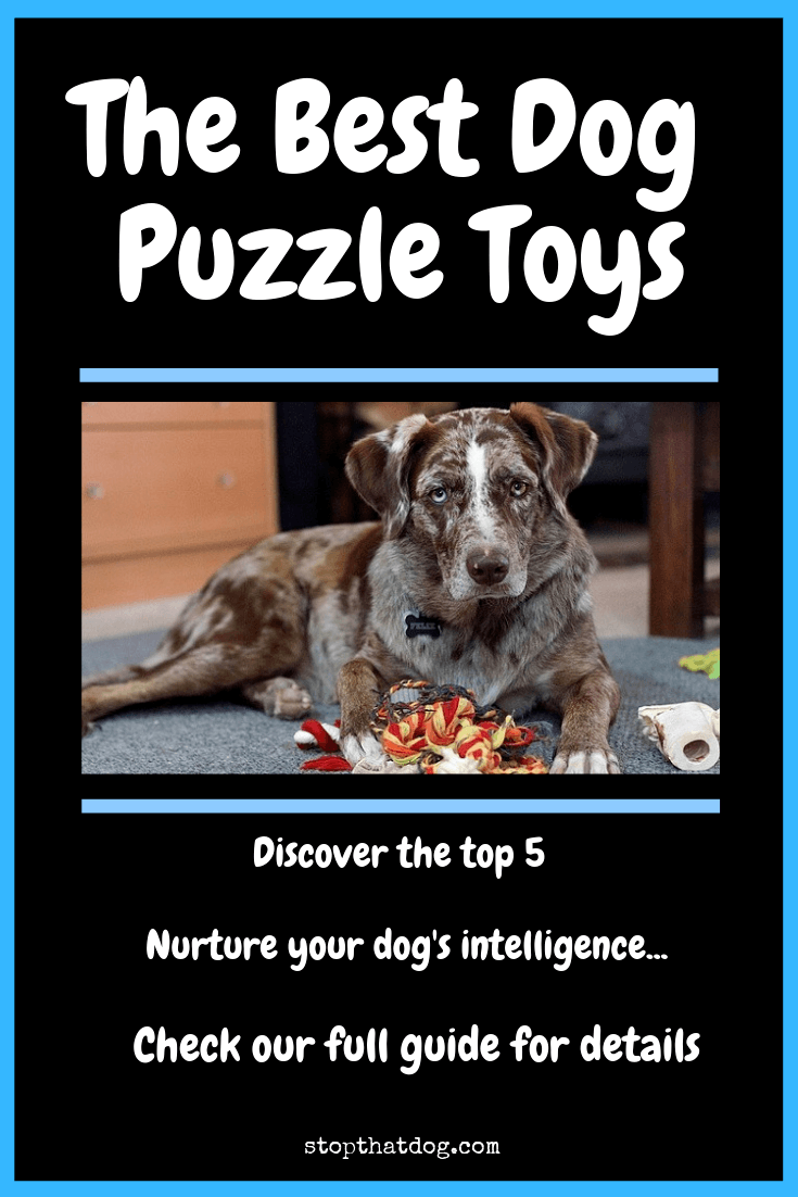 What\'s The Best Dog Puzzle Toy? A Complete Guide