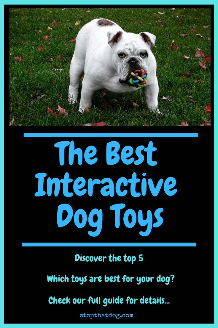 What Are The Best Interactive Dog Toys? Our Complete Guide