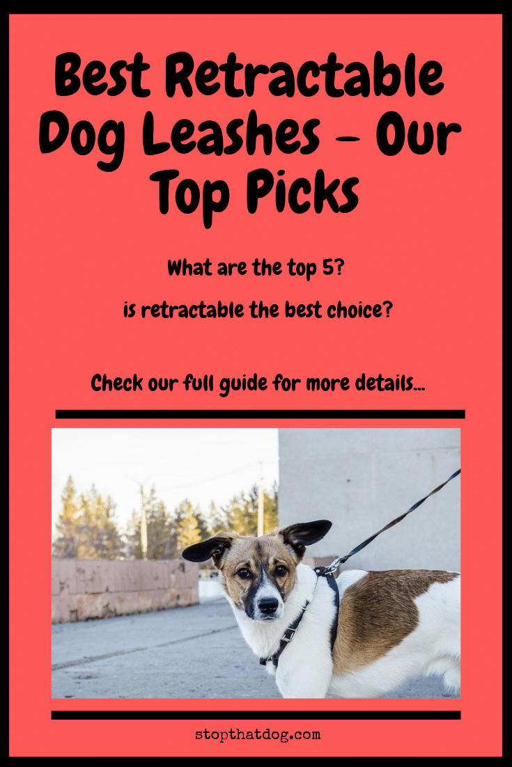 What's The Best Retractable Dog Leash? Our Favorite Picks