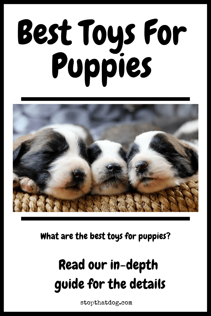 What Are The Best Toys For Puppies?