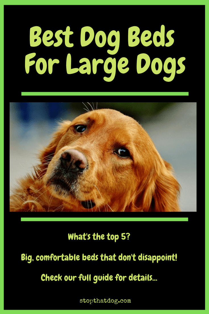 What's The Best Dog Bed For Large Dogs? Our Ultimate Guide