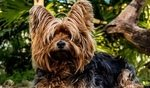 What's The Best Dog Food for Yorkies? Our Favorite Picks 5