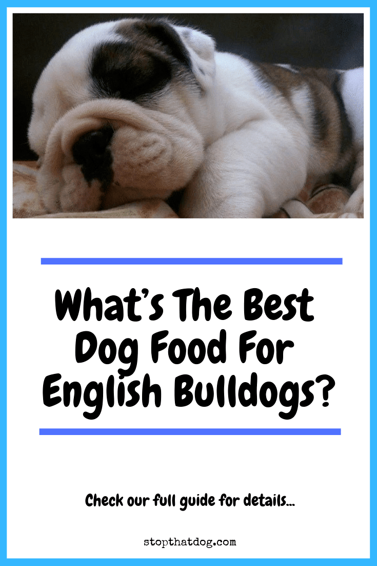 What's The Best Dog Food For English Bulldogs?