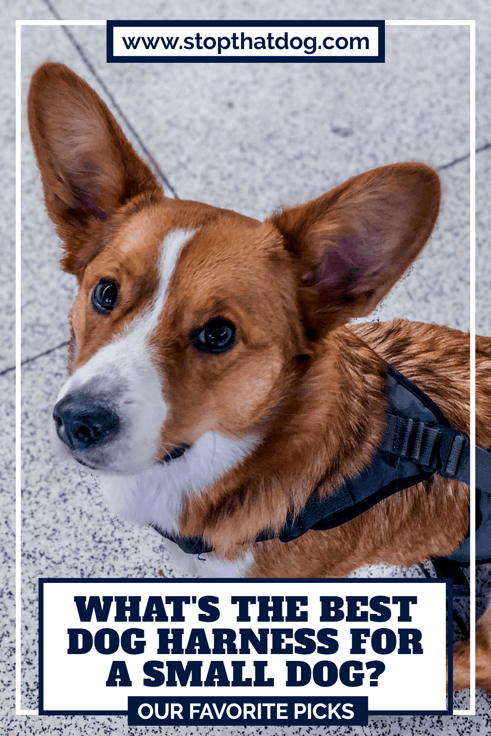 What\'s The Best Small Dog Harness? Our Favorite Picks