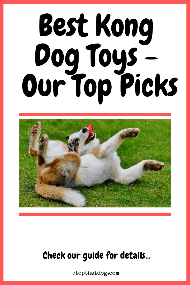 What Are The Best Kong Dog Toys? Our Top Picks