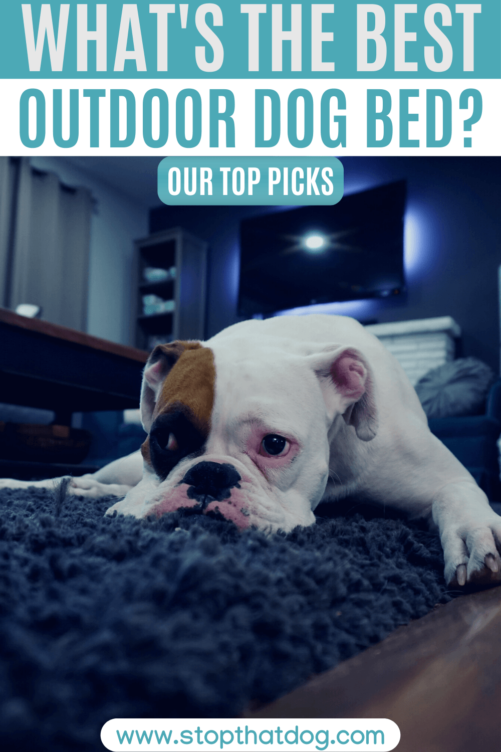 What's The Best Outdoor Dog Bed? Our Top Picks