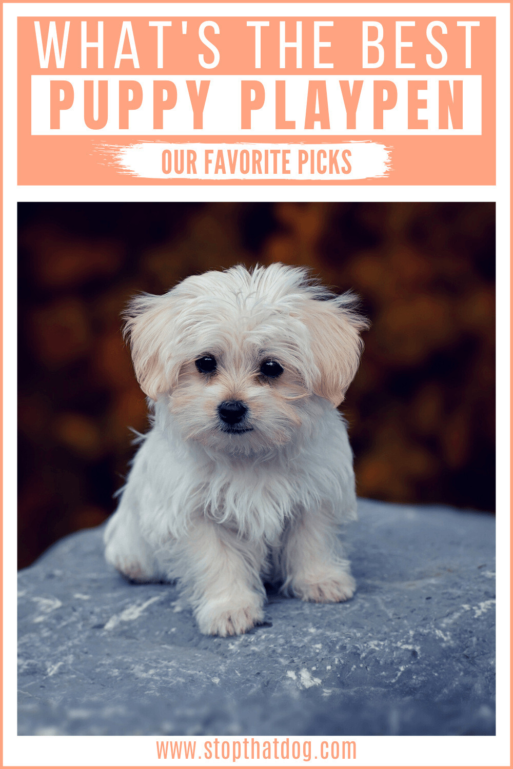What Are The Best Puppy Playpens In 2020?