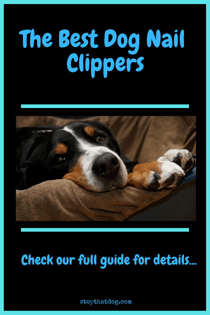 What Are The Best Dog Nail Clippers? Our Complete Guide