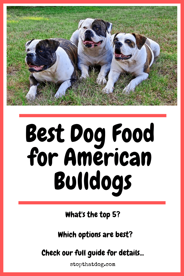 Best Dog Food for American Bulldogs – Perfect Choices That Your Dog Will Love