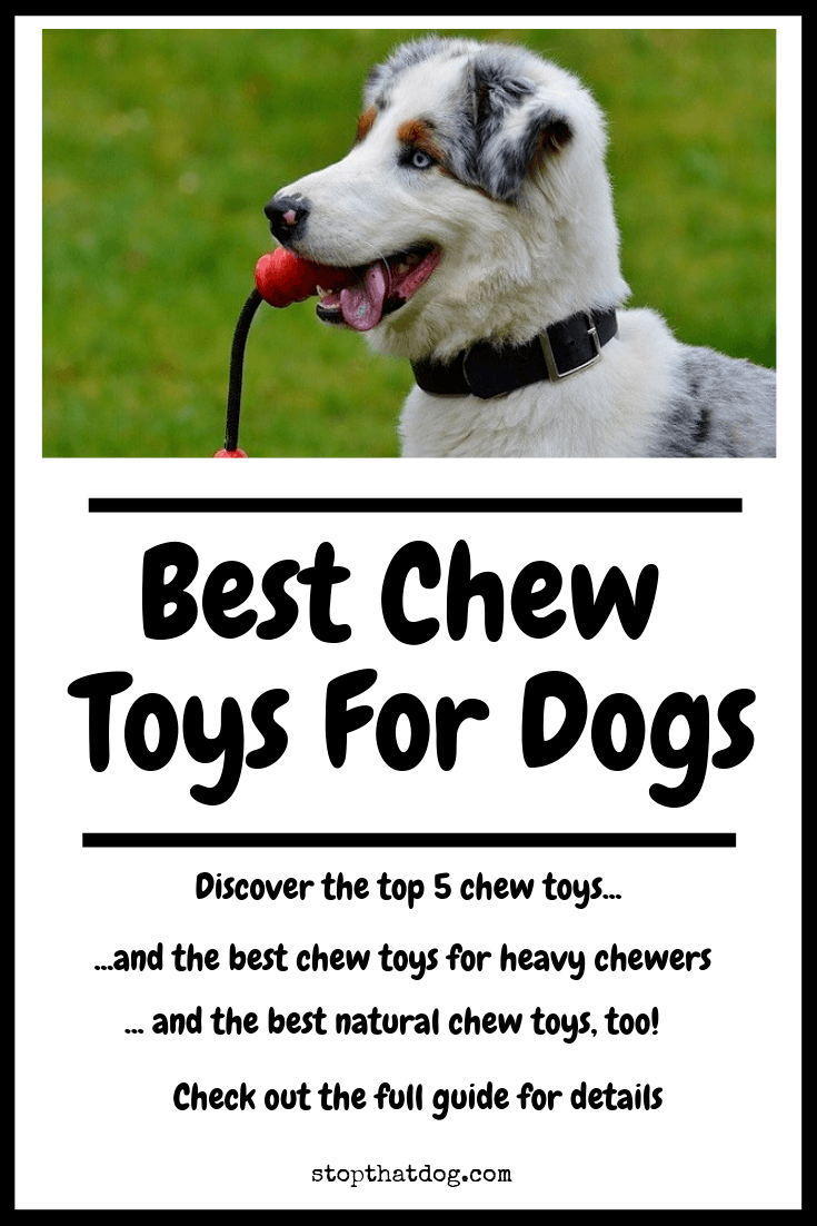What Are The Best Chew Toys For Dogs? Your Ultimate Guide