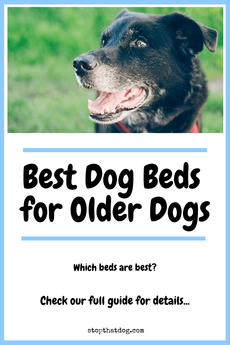 What's The Best Dog Bed For Older Dogs?