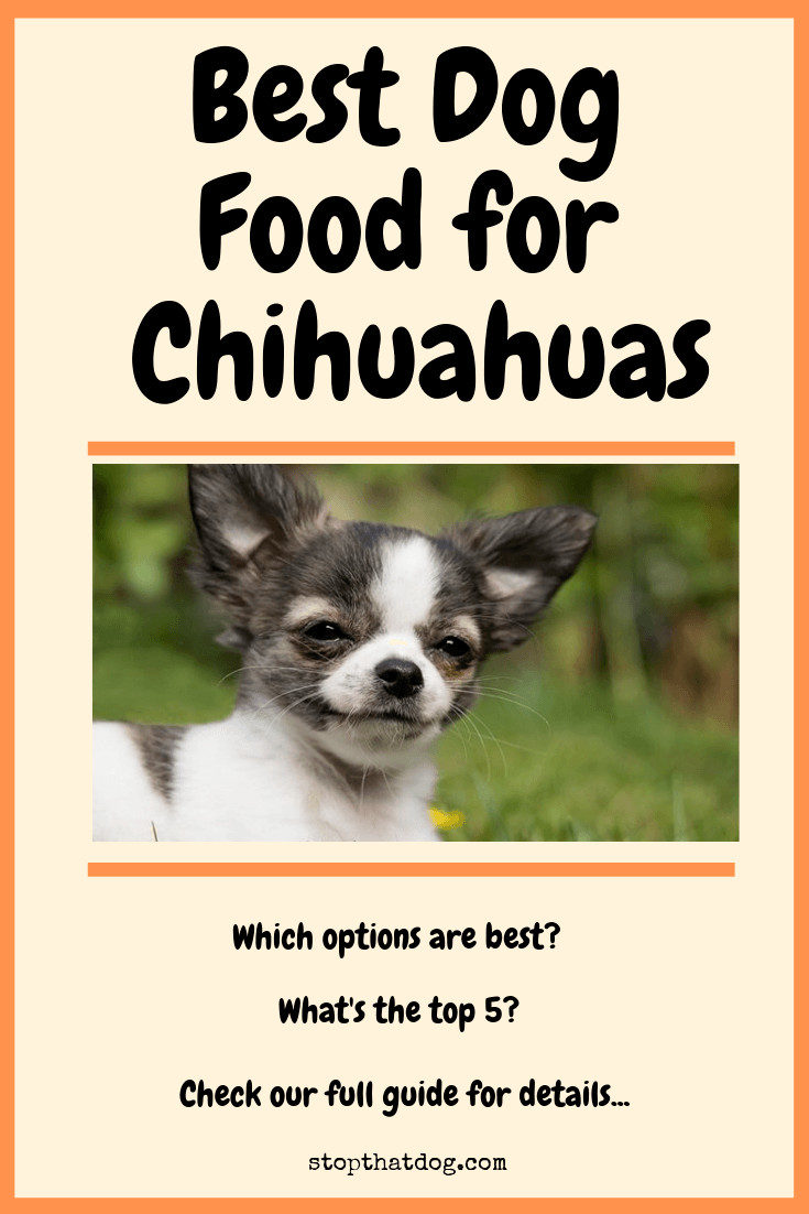 What's The Best Dog Food For Chihuahuas?