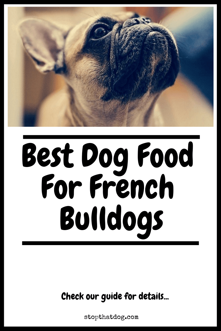 What's The Best Dog Food For French Bulldogs? A Complete Guide