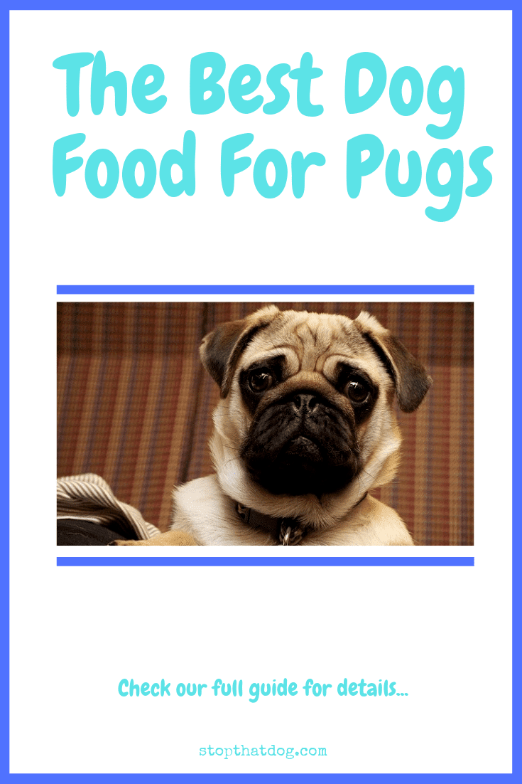 What's The Best Dog Food For Pugs?