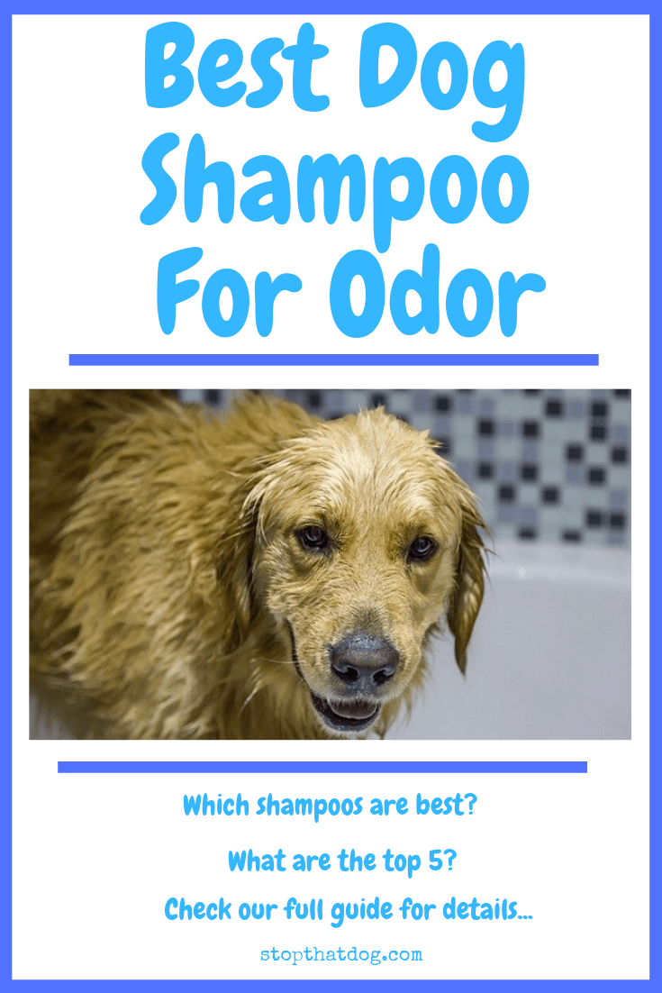 What's The Best Dog Shampoo For Odor?