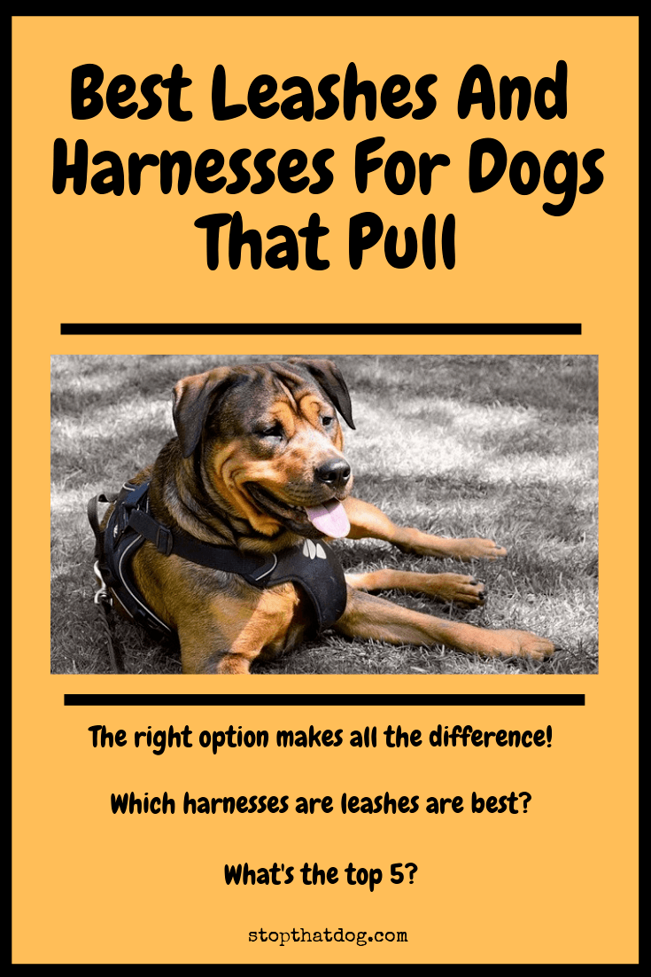What Are The Best Leashes And Harnesses For Dogs That Pull?