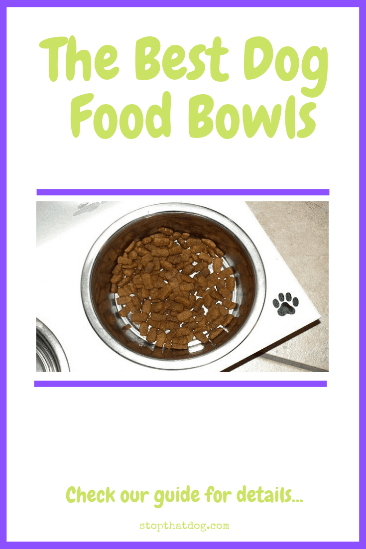 What\'s The Best Dog Food Bowl? Our Top Picks