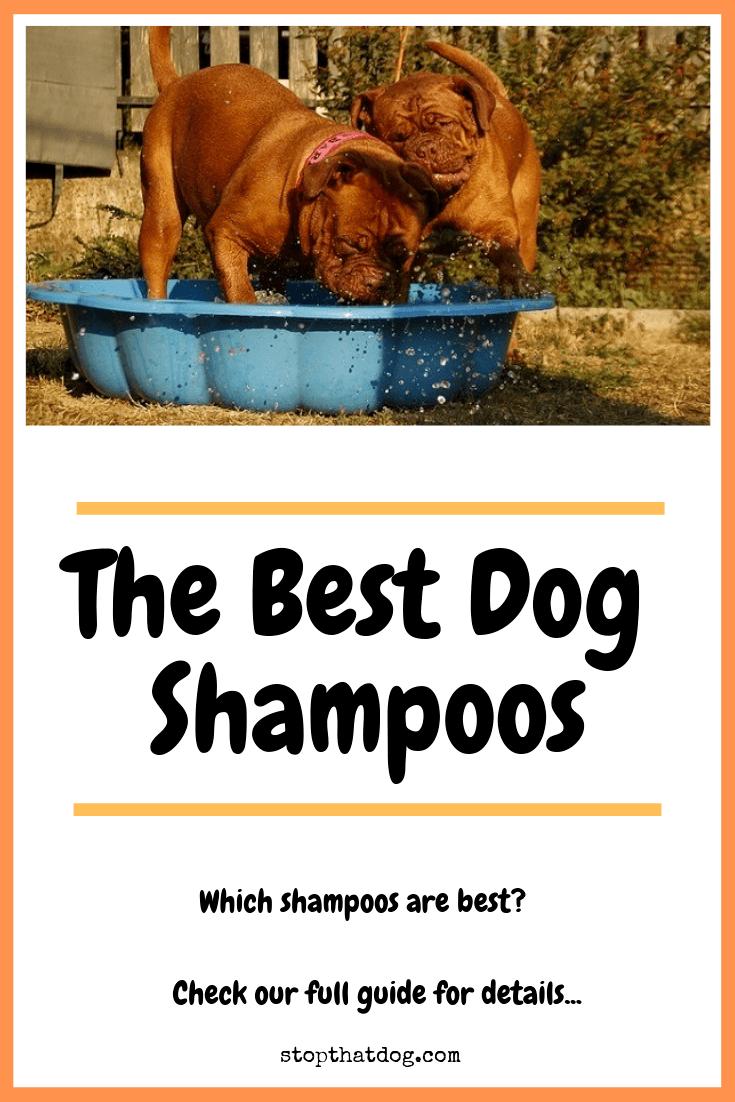 What's The Best Dog Shampoo?