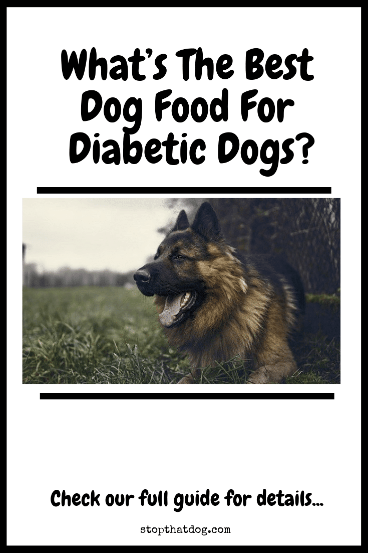 What's The Best Dog Food For Diabetic Dogs?