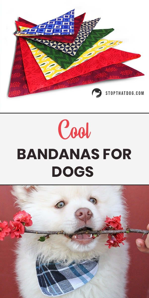 The Best Bandanas For Dogs - An In-Depth Guide