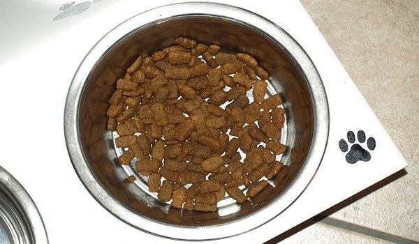 What's The Best Dog Food Bowl? Our Top Picks 1
