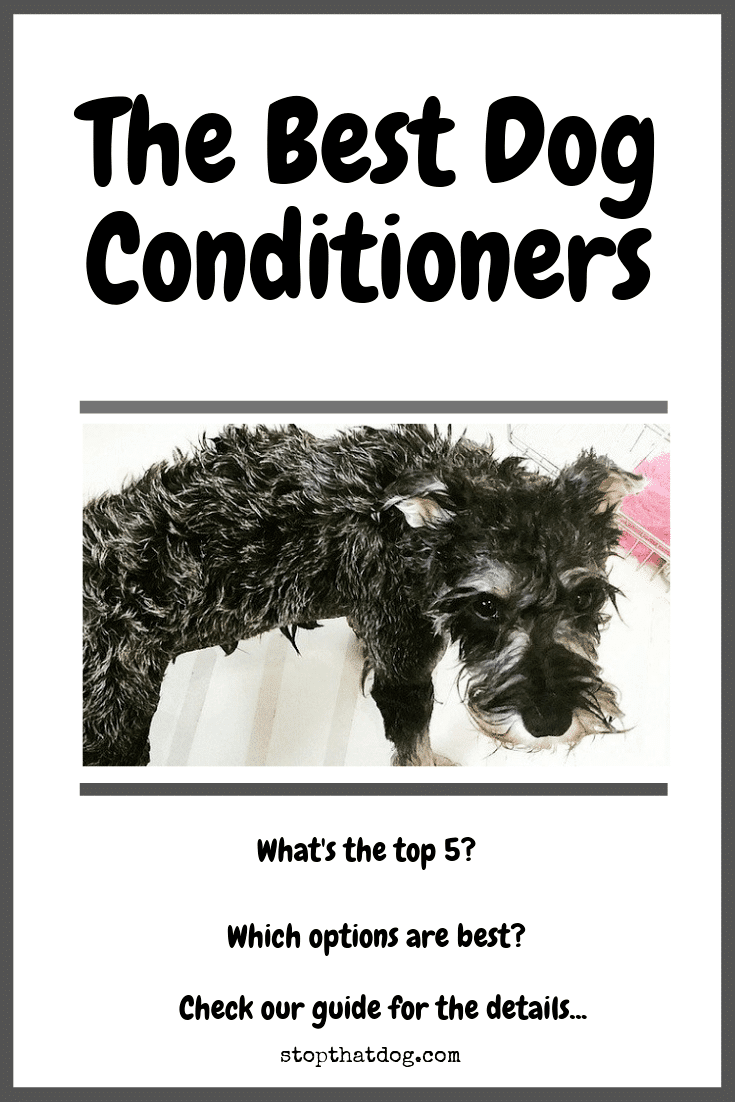 What\'s The Best Dog Conditioner? Our Top Picks