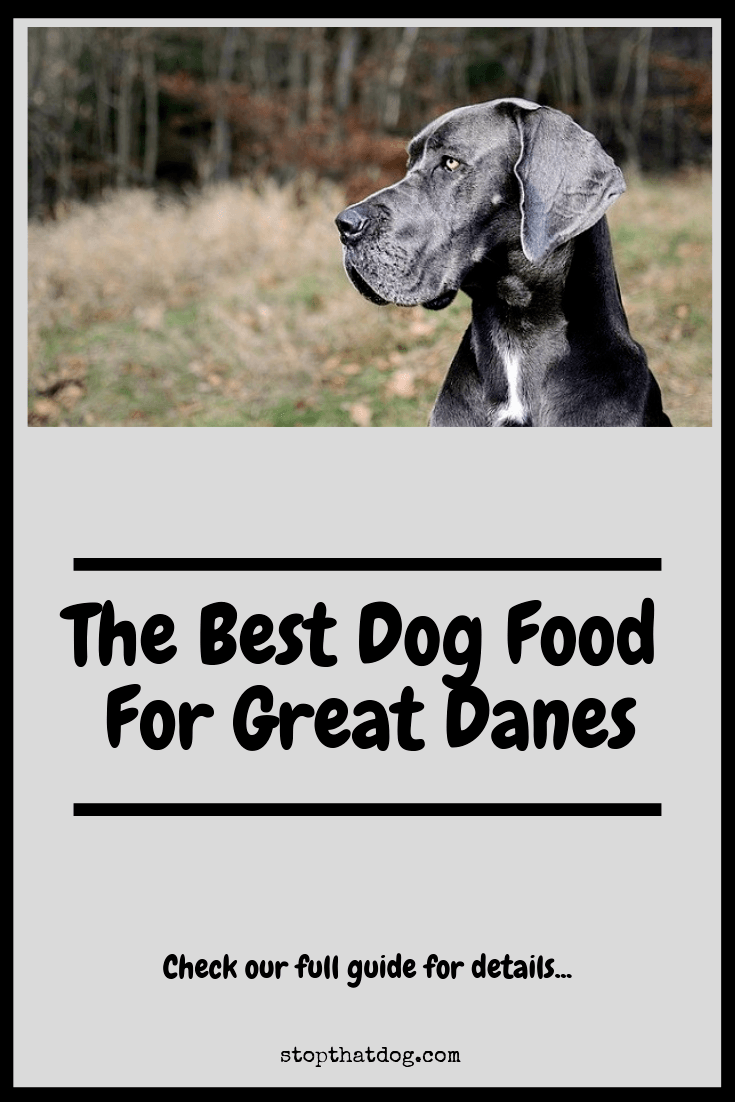 What's The Best Dog Food For Great Danes?