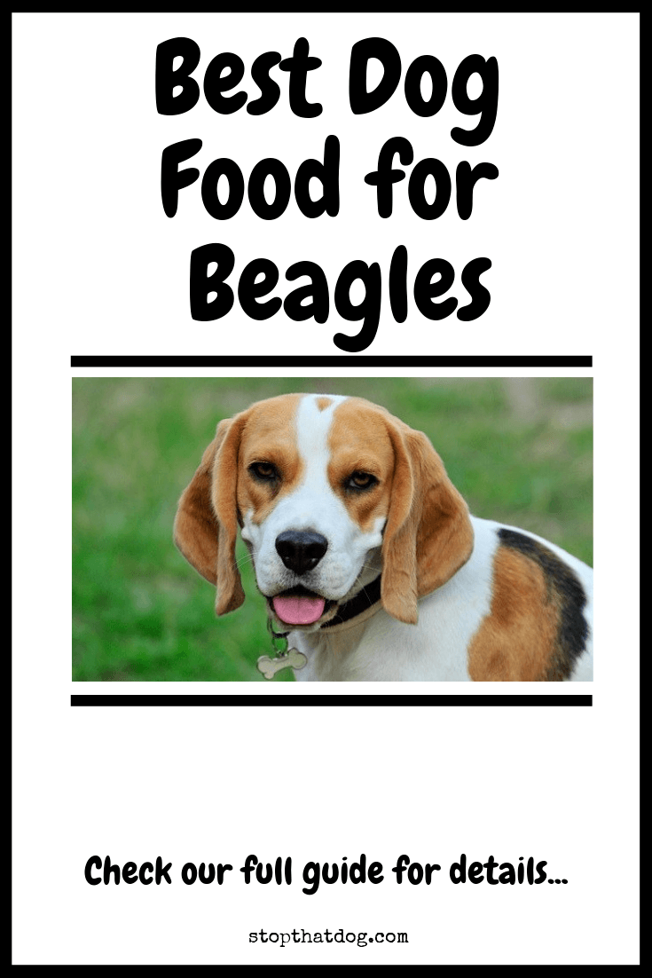 What's The Best Dog Food for Beagles?
